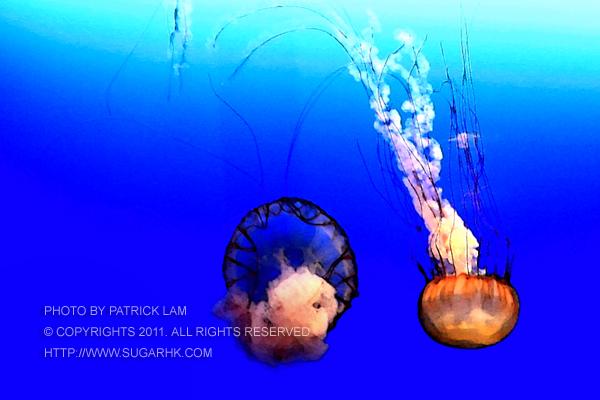 攝影 作品 水母間 攝影海洋公園 水母萬花筒